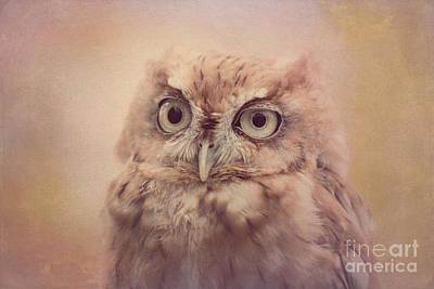 Photograph - Screech Owl 4 by Chris Scroggins