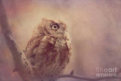 Photograph - Screech Owl 5 by Chris Scroggins