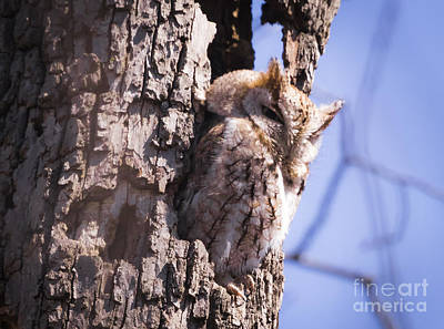 Photograph - Screech Owl Enjoying The Warm Weather by Ricky L Jones