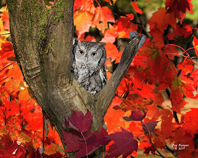 Photograph - Screech Owl In Fall by Peg Runyan