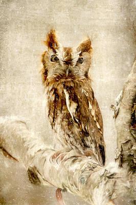 Screech Owl Photograph - Screech Owl In The Snow by Pat Eisenberger