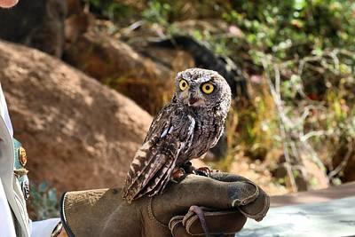 Photograph - Screech Owl by Kathryn Meyer