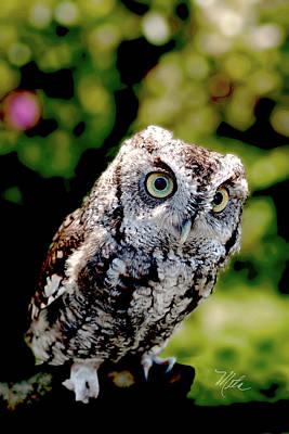 Photograph - Screech Owl by Meta Gatschenberger