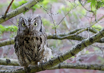 Photograph - Screech Owl Tree by Steve McKinzie