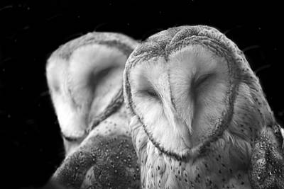 Screeching Owls Original