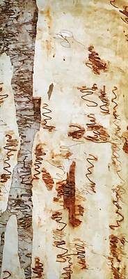 Photograph - Scribbly Gum Tree by Sandy Taylor