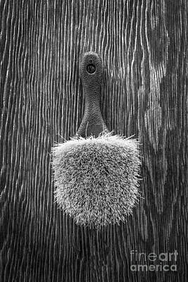 Photograph - Scrub Brush Bw by YoPedro