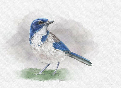 Painting - Scrub Jay by Kathie Miller