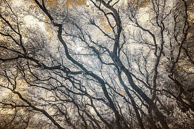 Photograph - Scrub Oak Sky - Infrared by Alexander Kunz