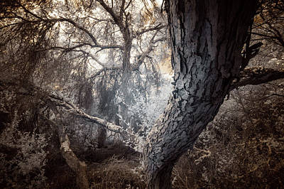 Photograph - Scrub Oaks - Infrared by Alexander Kunz