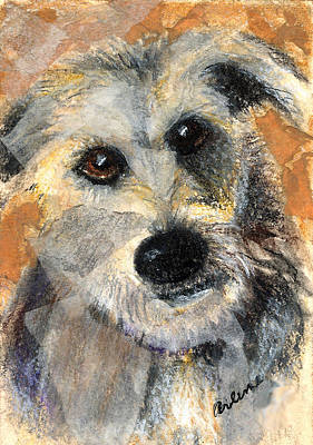 Watercolor Pet Portraits Mixed Media - Scruffy by Arline Wagner