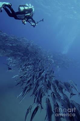Videographer Photograph - Scuba Diver Swimming Over A Massive by Brent Barnes
