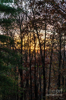Photograph - Sdc Woody Sunset by Jennifer White