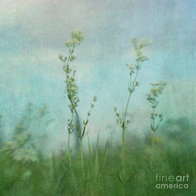 Summer Meadow Poem 3 Art Print by Priska Wettstein