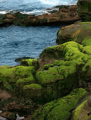 Photograph - Sea And Moss by Jeffrey Ringer