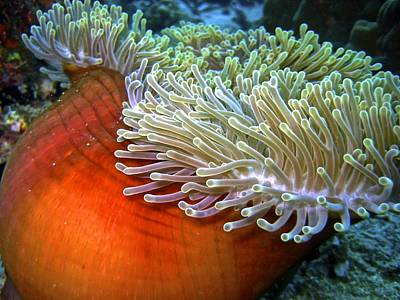 Photograph - Sea Anemone by Jamie Price