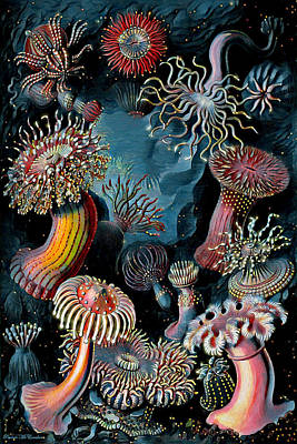 Digital Art - Sea Anemones by Pennie McCracken
