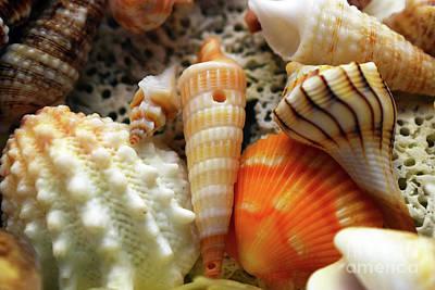 Photograph - Sea Beauty by Patti Whitten