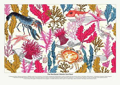 Sea Bed Annotated Art Print by Jacqueline Colley