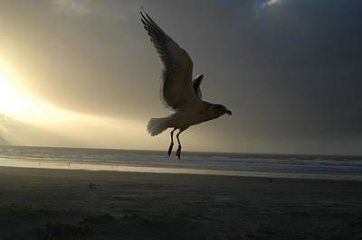 Photograph - Sea Bird 6 by Sara Stevenson