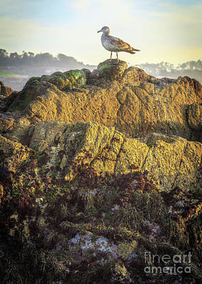 Photograph - Sea Bird On Point Lobos by Craig J Satterlee