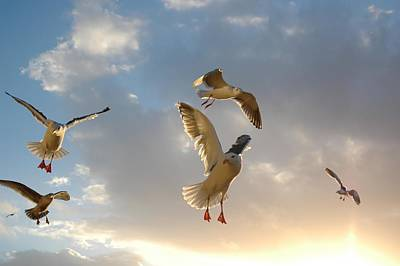 Photograph - Sea Birds 10 by Sara Stevenson