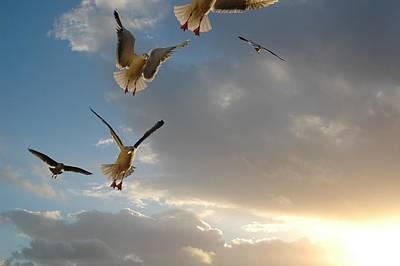 Photograph - Sea Birds 11 by Sara Stevenson