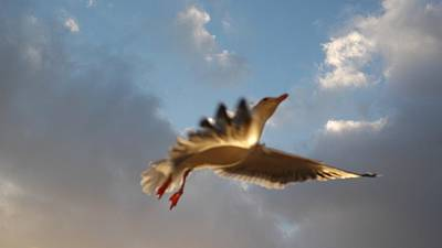 Photograph - Sea Birds 12 by Sara Stevenson
