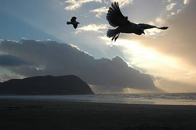 Photograph - Sea Birds 2 by Sara Stevenson
