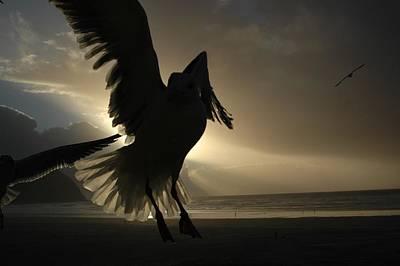 Photograph - Sea Birds 4 by Sara Stevenson
