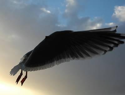 Photograph - Sea Birds 7 by Sara Stevenson