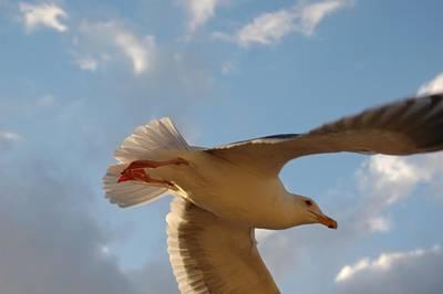 Photograph - Sea Birds 9 by Sara Stevenson