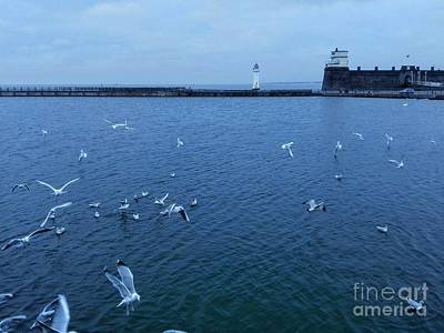 Photograph - Sea Birds At New Brighton In Blue by Joan-Violet Stretch