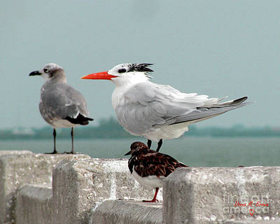 Art Print featuring the photograph Sea Birds by Donna Brown