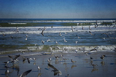 Photograph - Sea Birds Feeding On Florida Coast Dsc00473_16 by Greg Kluempers