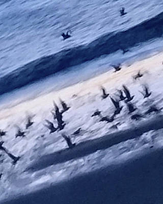 Photograph - Sea Birds In Flight by Leah Palmer