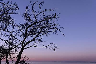 Photograph - Sea Birds Silhouette by Scott Cunningham