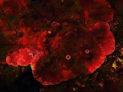 Photograph - Sea Creature by Lori Seaman