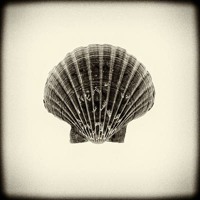 Consumerproduct Mixed Media - Sea Creatures, The Shell #12 by Valentin Gladyshev