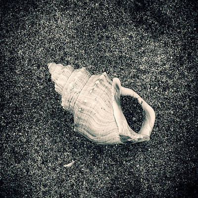 Consumerproduct Mixed Media - Sea Creatures, The Shell #13 by Valentin Gladyshev