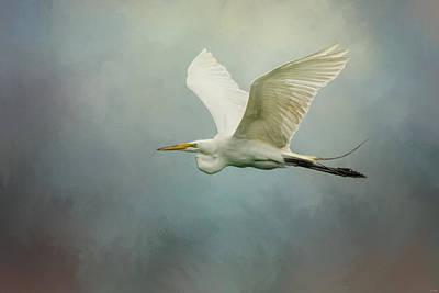 Photograph - Sea Flight by Jai Johnson