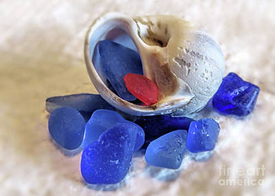 Photograph - Sea Glass And Snail Shell  by Janice Drew