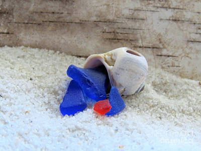 Photograph - Sea Glass Hermit Crab  by Janice Drew