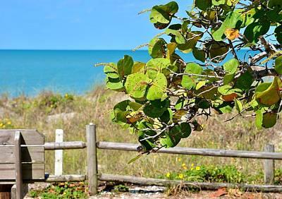 Photograph - Sea Grapes by John Hintz