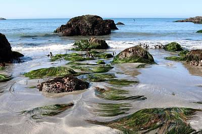 Photograph - Sea Grass - 3  by Christy Pooschke