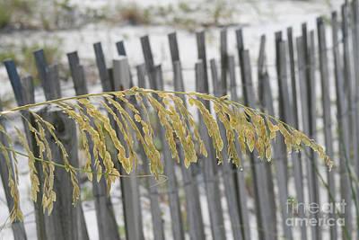 Photograph - Sea Grass And Fence by Karen Adams