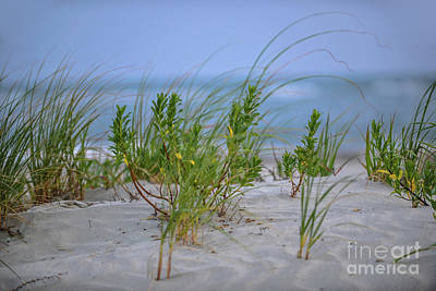 Photograph - Sea Grass Blowing In The Wind by Dale Powell