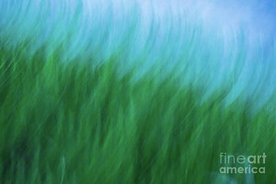 Photograph - Sea Grass Breeze by Robin Zygelman