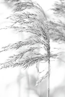 Sweden Digital Art - Sea Grass By The Lake by Tommytechno Sweden