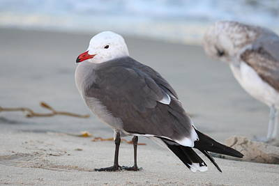 Photograph - Sea Gull - 2  by Christy Pooschke